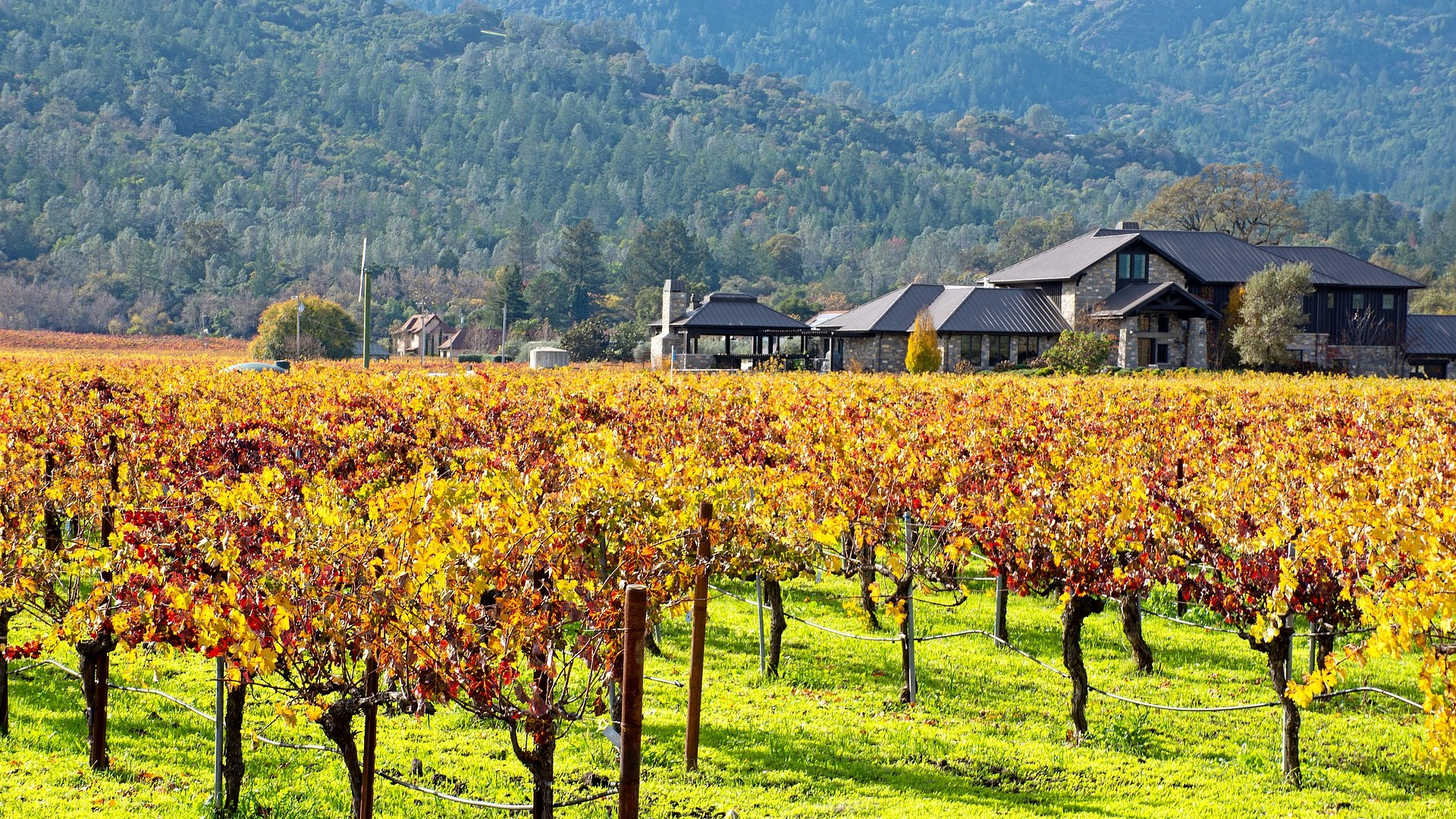 San Francisco & Napa Valley Region